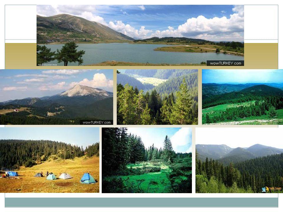 Zdroje http://www.goturkey.com/ http://www.gototurkey.co.uk/ http://www.allaboutturkey.com/millipark.htm http://www.turism.turkemb.se/sites/nationalparker.htm http://www.nationalparks-worldwide.info/turkey.htm http://www.dagbasi.com/info/mpbrosur/ilgaz/ilgaz_mpen.htm http://www.treking.cz/treky/kackar.htm http://www.dagbasi.com/info/mpbrosur/ilgaz/ilgaz_mpen.htm http://wwwtreking.cz/treky/kackar.htm http://www.velehory.cz/zeme/turecko/trek-pres-ilgaz-dagi http://www.kastamonu.edu.tr/files/file/orman/dergi/2009%20mayis/66-79.pdf www.ogm.gov.tr/sites1/mantar19.htm wikipedia.org DĚKUJEME ZA POZORNOST