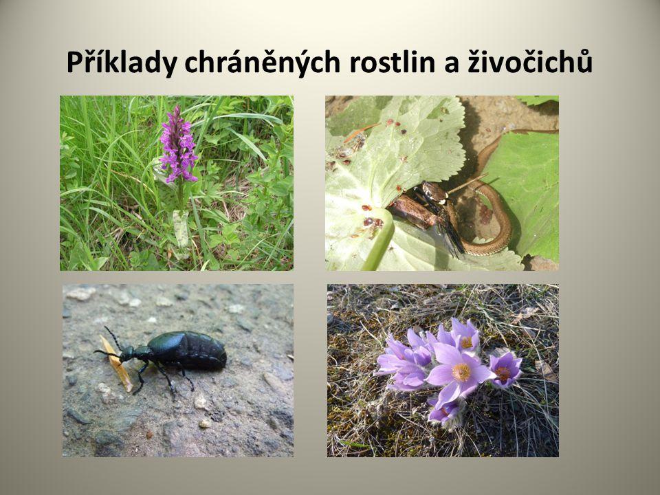 Příklady chráněných rostlin a živočichů