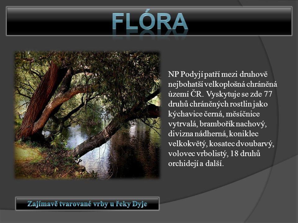 NP Podyjí patří mezi druhově nejbohatší velkoplošná chráněná území ČR. Vyskytuje se zde 77 druhů chráněných rostlin jako kýchavice černá, měsíčnice vy