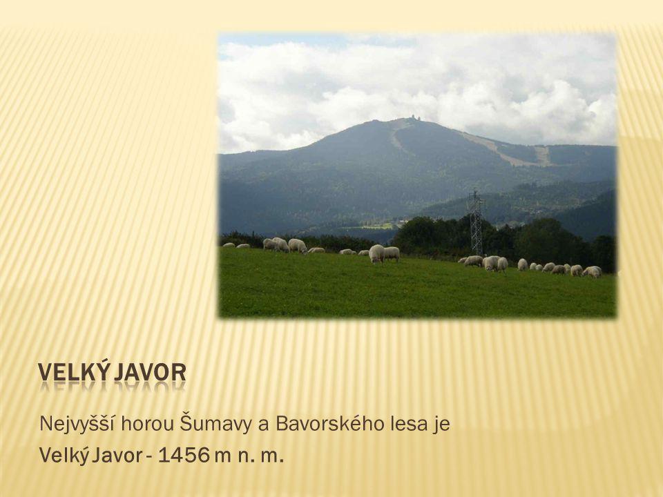 Nejvyšší horou Šumavy a Bavorského lesa je Velký Javor - 1456 m n. m.