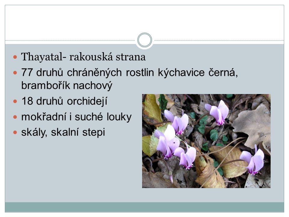 Thayatal- rakouská strana 77 druhů chráněných rostlin kýchavice černá, brambořík nachový 18 druhů orchidejí mokřadní i suché louky skály, skalní stepi