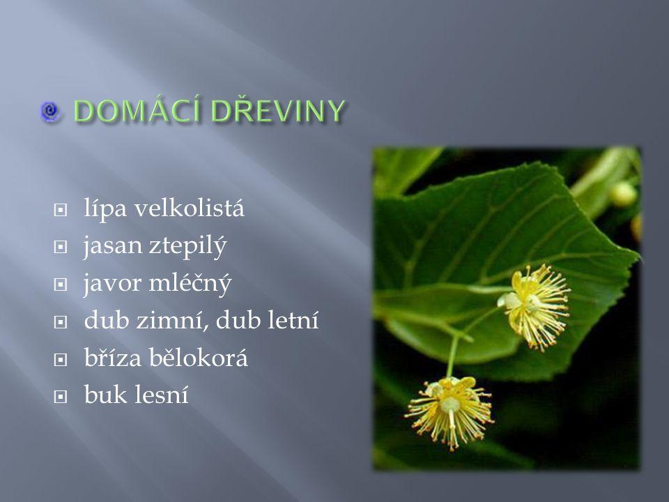  liliovník tulipánokvětý (lyrovník)  borovice černá krymská  jírovec maďal (,,kaštan koňský )  moruše bílá  metasekvoje čínská  třešeň pilovitá (sakura)  katalpa trubačovitá