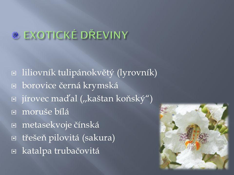 """ liliovník tulipánokvětý (lyrovník)  borovice černá krymská  jírovec maďal (,,kaštan koňský"""")  moruše bílá  metasekvoje čínská  třešeň pilovitá"""