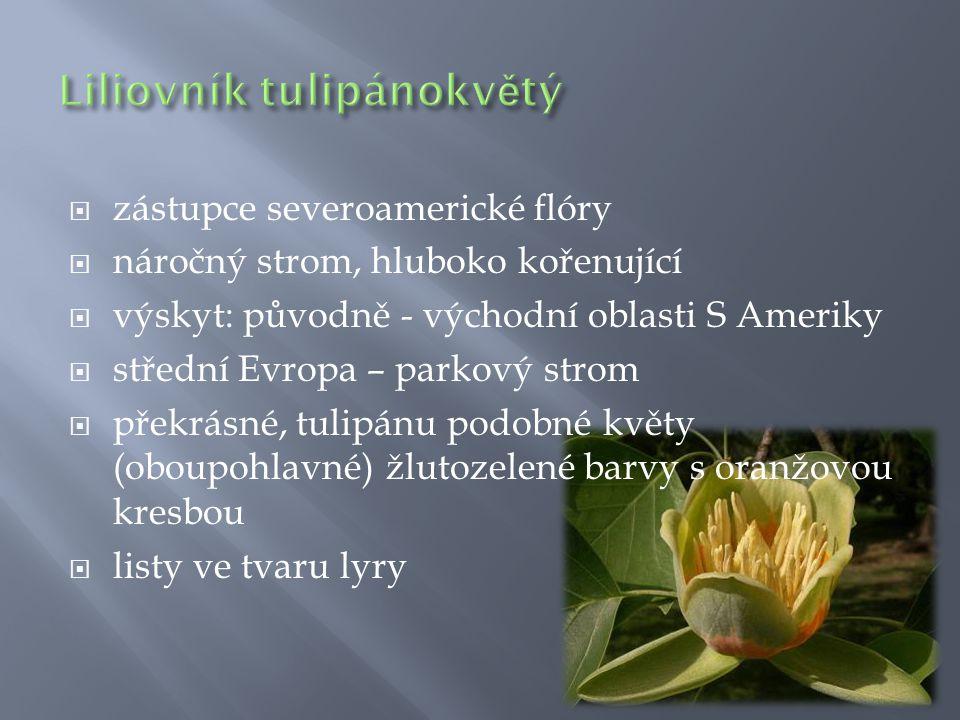  zástupce severoamerické flóry  náročný strom, hluboko kořenující  výskyt: původně - východní oblasti S Ameriky  střední Evropa – parkový strom 