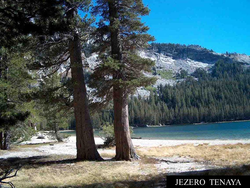 NÁRODNÍ PARK YOSEMITE, VLEVO EL CAPITAN Yosemite je jedna z největších a nejsouvislejších neporušených přírodních oblastí v Sierra Nevadě, kde chrání