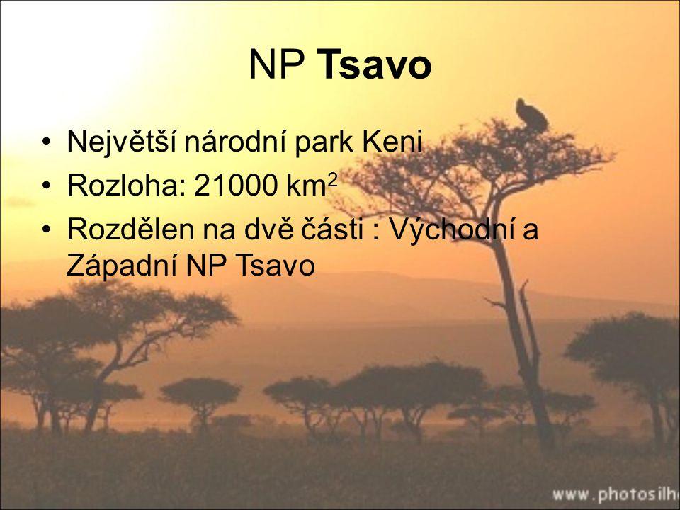 NP Tsavo Největší národní park Keni Rozloha: 21000 km 2 Rozdělen na dvě části : Východní a Západní NP Tsavo