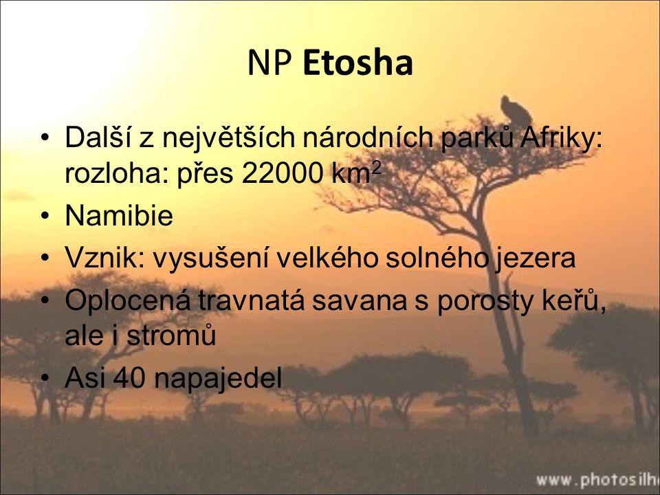 NP Etosha Další z největších národních parků Afriky: rozloha: přes 22000 km 2 Namibie Vznik: vysušení velkého solného jezera Oplocená travnatá savana