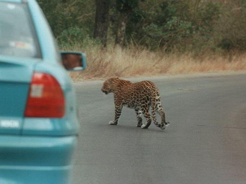 Měří necelých 20 000 km2 a nachází se v Transvaalu na hranicích s Mosambikem a Zimbabwe.
