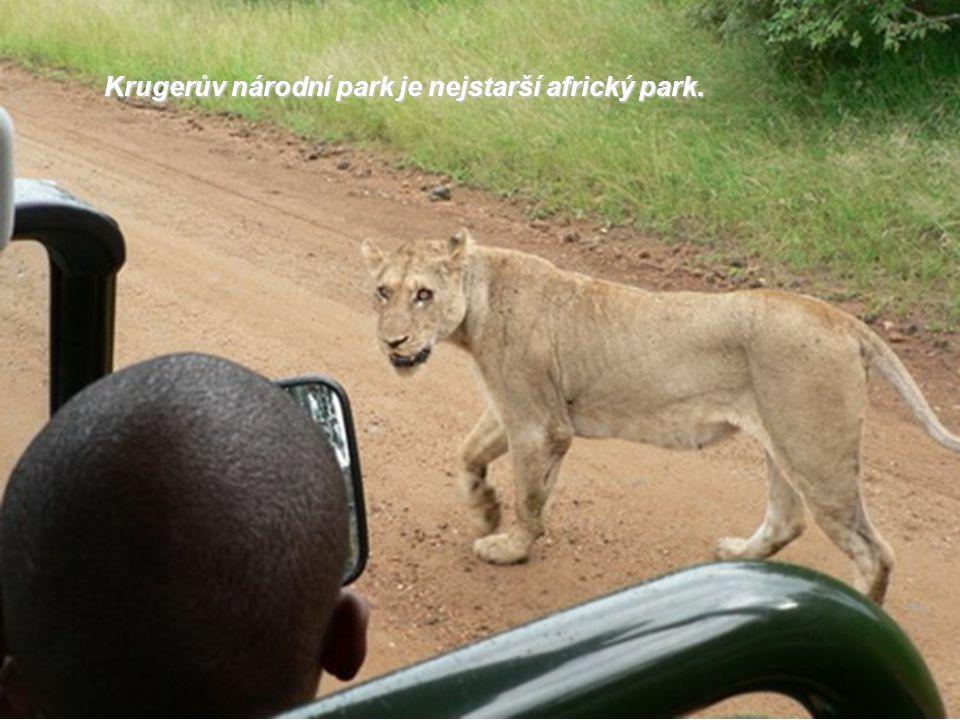 Krugerův národní park je nejstarší africký park.