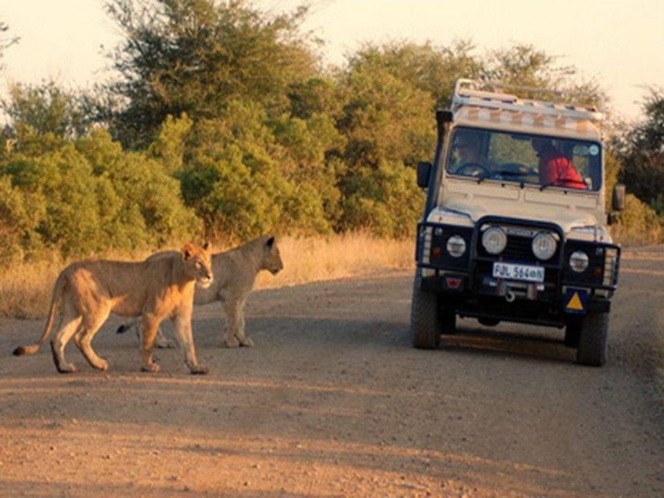 O Krugerově parku jsou vydávány knihy, O Krugerově parku jsou vydávány knihy, zoologové i umělci tam pracují celý život.