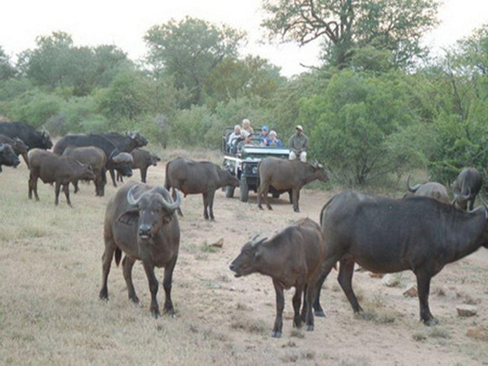 Od Krokodýlí řeky na jihu k Limpopu na severu měří 350 km, Je v něm 2400 km silnic a 24 kempů, ve kterých je možné přenocovat.