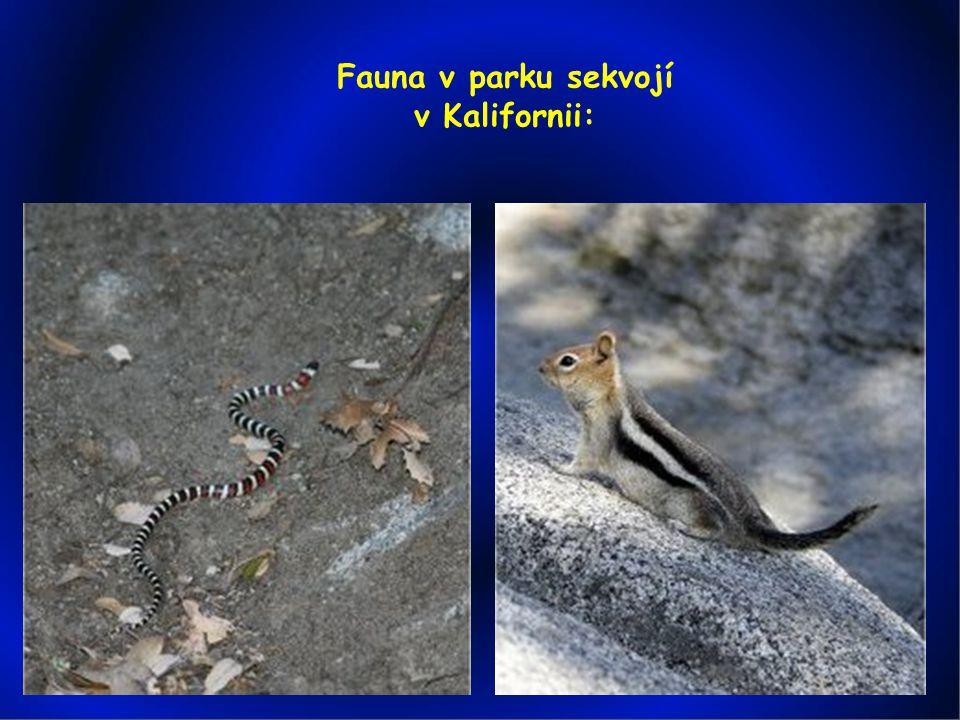 Fauna v parku sekvojí v Kalifornii: