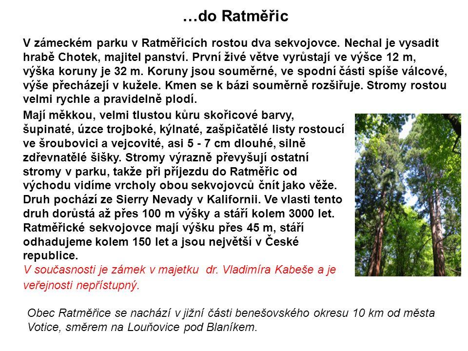 Pár tipů kam a jak se jít podívat v ČR na sekvojovce: Například udělat si pěkný výlet: Podíváme se do jihovýchodní části Chřibů, vyrazíme z malé vesni