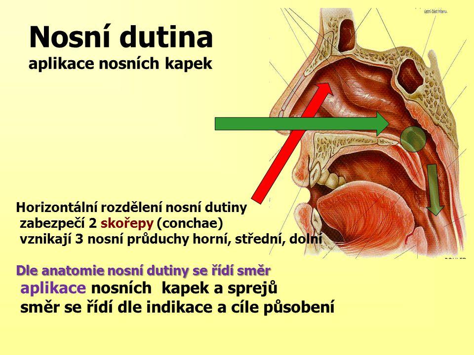 Nosní dutina aplikace nosních kapek Horizontální rozdělení nosní dutiny zabezpečí 2 skořepy (conchae) vznikají 3 nosní průduchy horní, střední, dolní