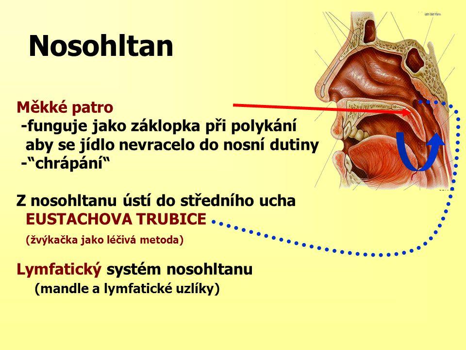 """Nosohltan Měkké patro -funguje jako záklopka při polykání aby se jídlo nevracelo do nosní dutiny -""""chrápání"""" Z nosohltanu ústí do středního ucha EUSTA"""