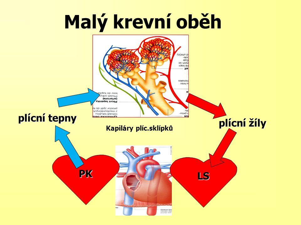 Malý krevní oběh PK plícní tepny plícní žíly LS Kapiláry plíc.sklípků
