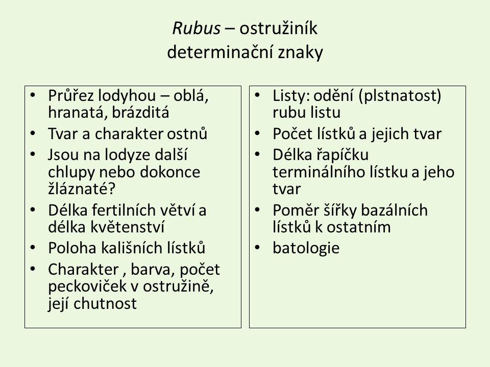 Rubus – ostružiník determinační znaky Průřez lodyhou – oblá, hranatá, brázditá Tvar a charakter ostnů Jsou na lodyze další chlupy nebo dokonce žláznaté.