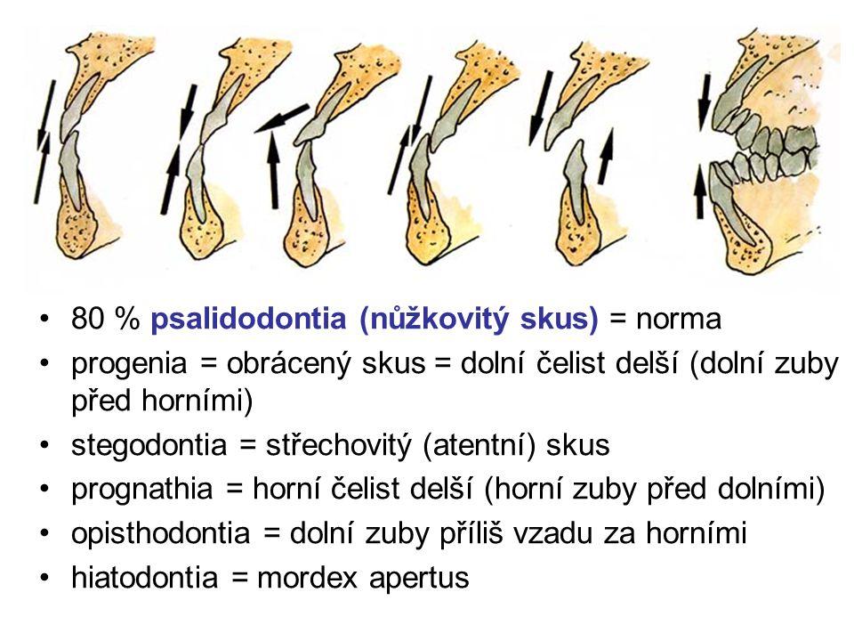 Chrup jako celek mordex = chrup ortodentní postavení – zuby svisle skus (occlusio) = okluze 80 % psalidodontia (nůžkovitý skus) = norma progenia = obr