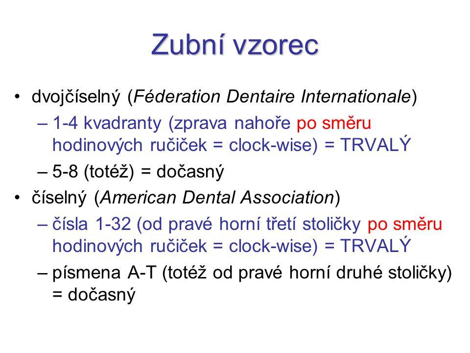Zubní vzorec dvojčíselný (Féderation Dentaire Internationale) –1-4 kvadranty (zprava nahoře po směru hodinových ručiček = clock-wise) = TRVALÝ –5-8 (t