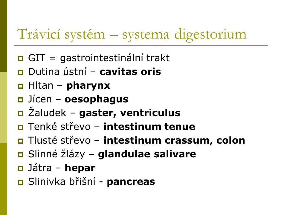 Trávicí systém – systema digestorium  GIT = gastrointestinální trakt  Dutina ústní – cavitas oris  Hltan – pharynx  Jícen – oesophagus  Žaludek –