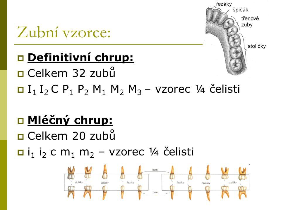 Zubní vzorce:  Definitivní chrup:  Celkem 32 zubů  I 1 I 2 C P 1 P 2 M 1 M 2 M 3 – vzorec ¼ čelisti  Mléčný chrup:  Celkem 20 zubů  i 1 i 2 c m