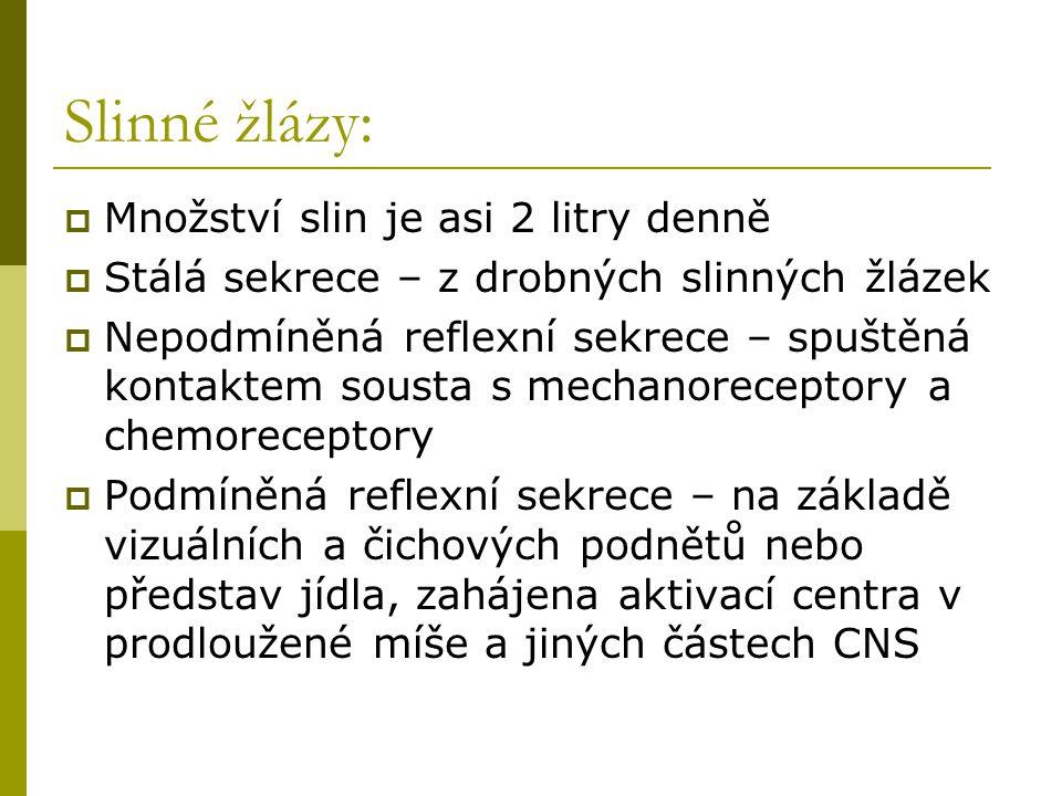 Slinné žlázy:  Množství slin je asi 2 litry denně  Stálá sekrece – z drobných slinných žlázek  Nepodmíněná reflexní sekrece – spuštěná kontaktem so