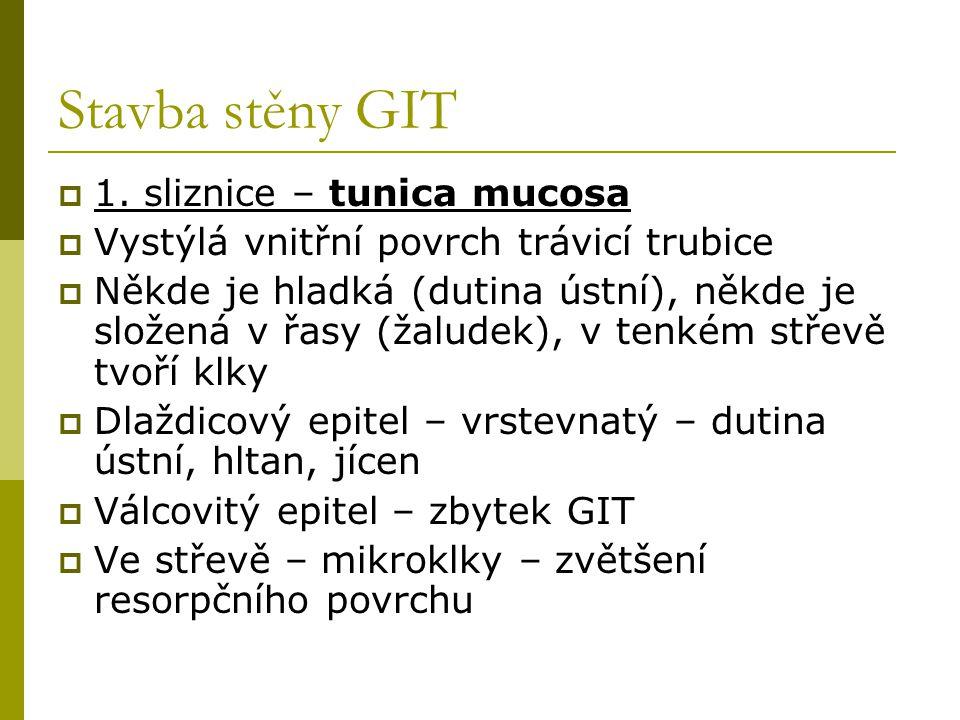 Stavba stěny GIT  1. sliznice – tunica mucosa  Vystýlá vnitřní povrch trávicí trubice  Někde je hladká (dutina ústní), někde je složená v řasy (žal
