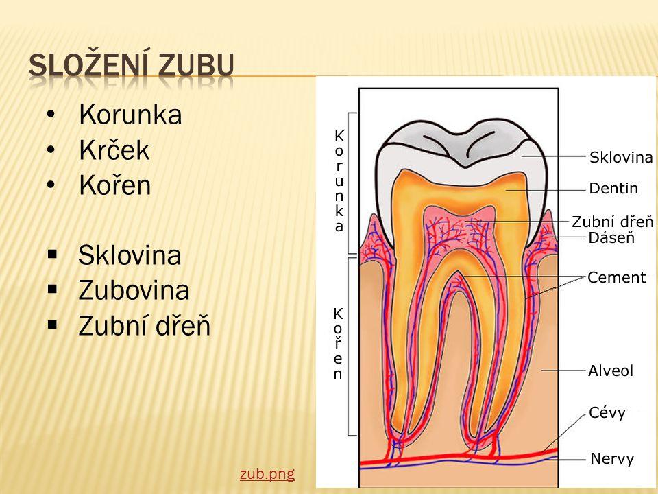  jsou v dutině ústní  Soubor zubů se nazývá chrup  Při správné péči vydrží celý život  Mléčný chrup (děti)– 28 zubů, je dočasný  Dospělý chrup – 32 zubů, je trvalý
