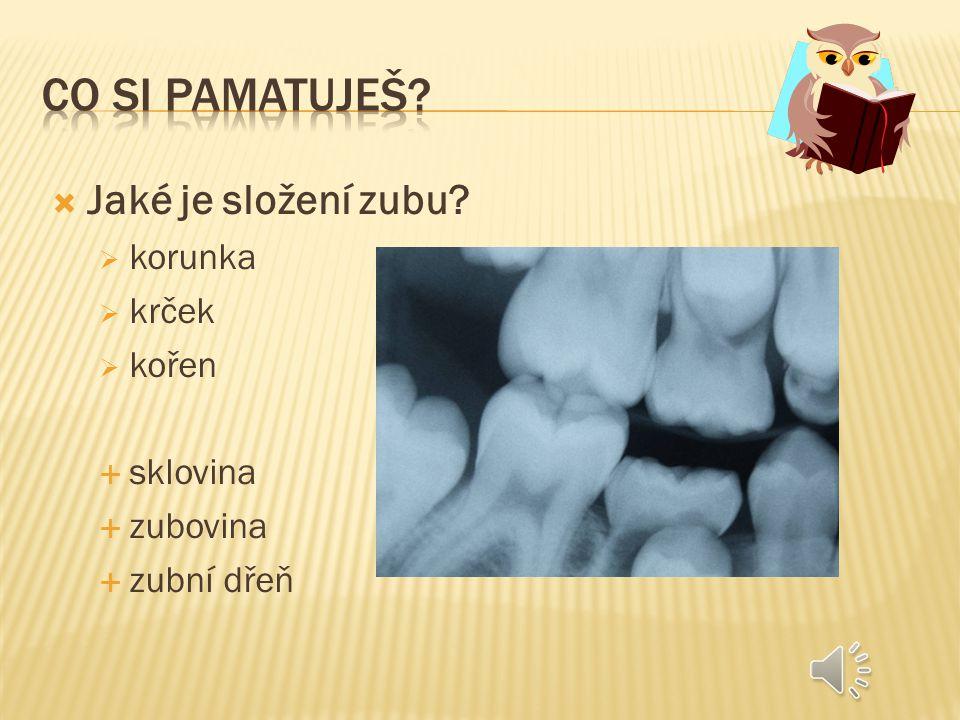  Jaké znáš druhy zubů.