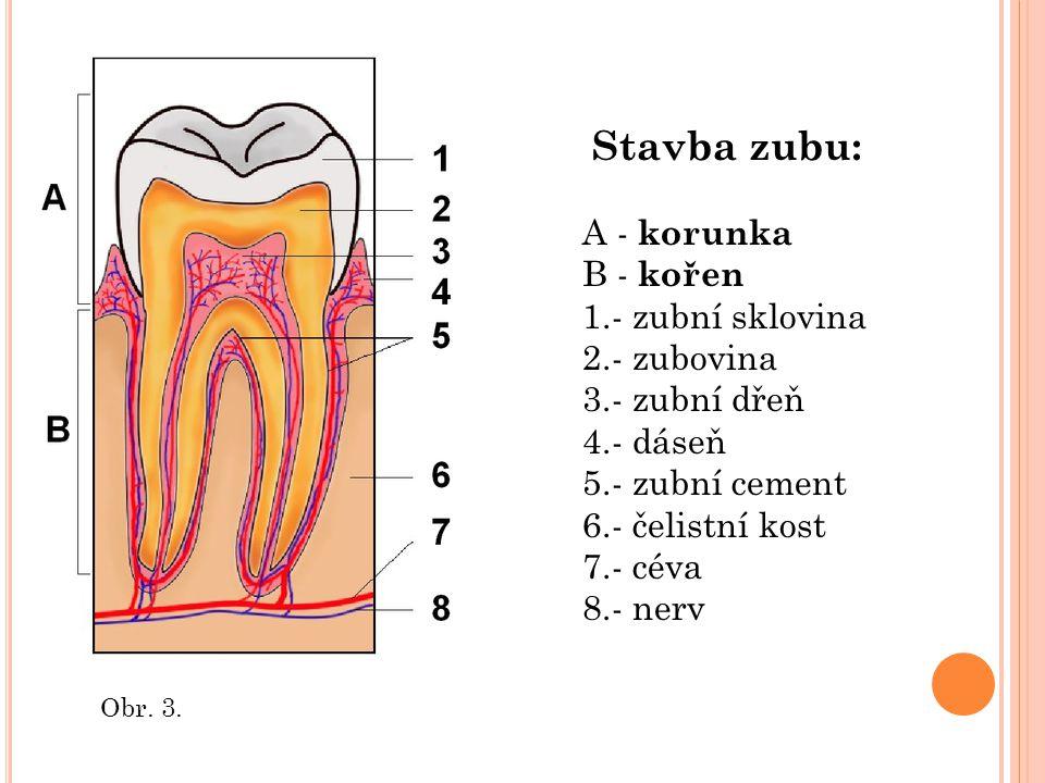 Obr. 3. Stavba zubu: A - korunka B - kořen 1.- zubní sklovina 2.- zubovina 3.- zubní dřeň 4.- dáseň 5.- zubní cement 6.- čelistní kost 7.- céva 8.- ne
