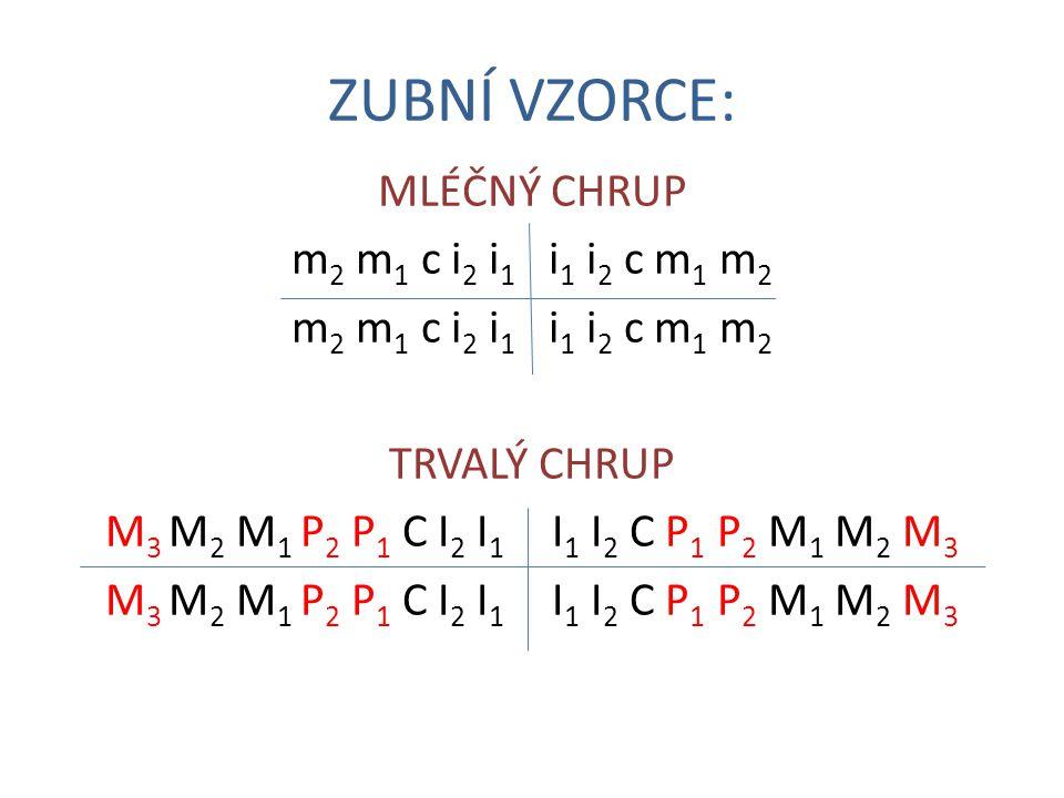 ZUBNÍ VZORCE: MLÉČNÝ CHRUP m 2 m 1 c i 2 i 1 i 1 i 2 c m 1 m 2 TRVALÝ CHRUP M 3 M 2 M 1 P 2 P 1 C I 2 I 1 I 1 I 2 C P 1 P 2 M 1 M 2 M 3