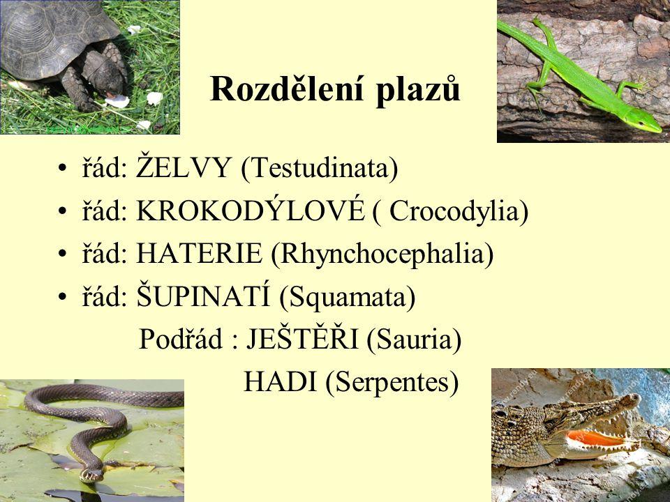 Rozdělení plazů řád: ŽELVY (Testudinata) řád: KROKODÝLOVÉ ( Crocodylia) řád: HATERIE (Rhynchocephalia) řád: ŠUPINATÍ (Squamata) Podřád : JEŠTĚŘI (Saur