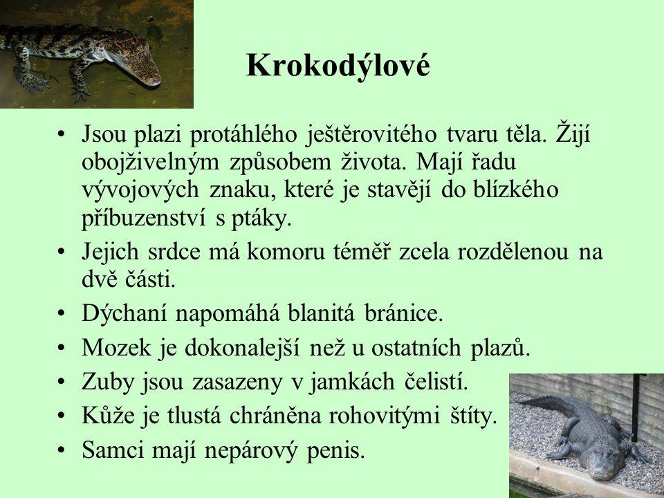 Krokodýlové Jsou plazi protáhlého ještěrovitého tvaru těla. Žijí obojživelným způsobem života. Mají řadu vývojových znaku, které je stavějí do blízkéh