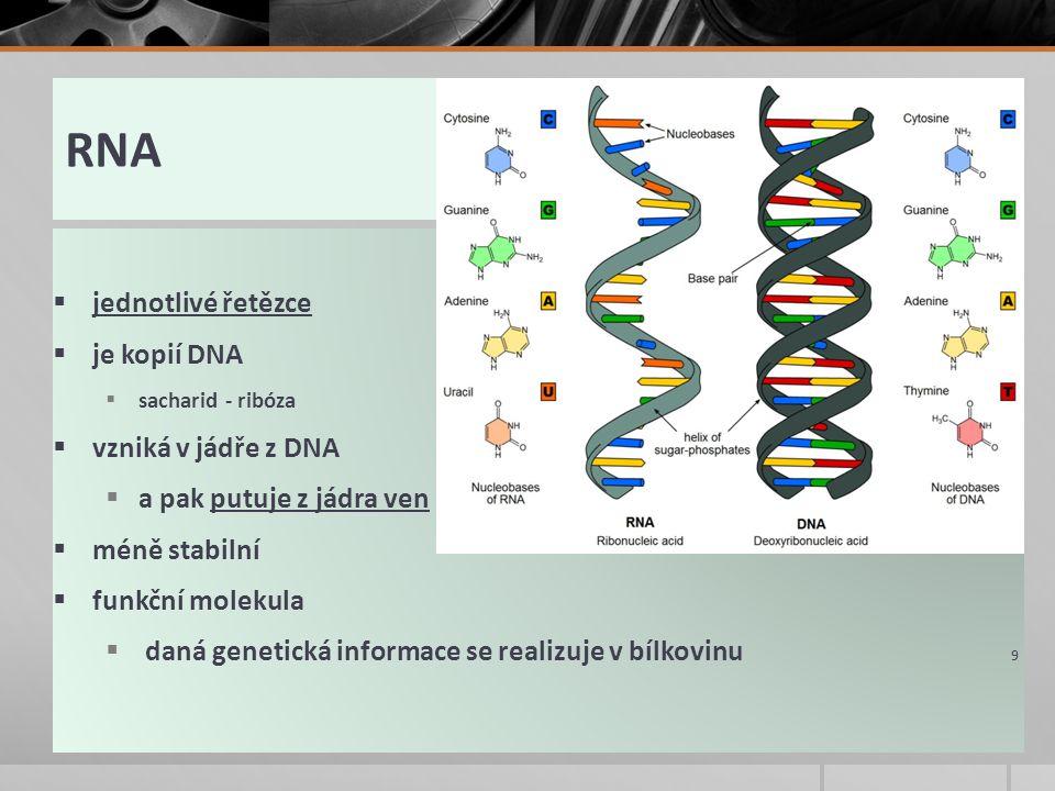 RNA  jednotlivé řetězce  je kopií DNA  sacharid - ribóza  vzniká v jádře z DNA  a pak putuje z jádra ven  méně stabilní  funkční molekula  daná genetická informace se realizuje v bílkovinu 9