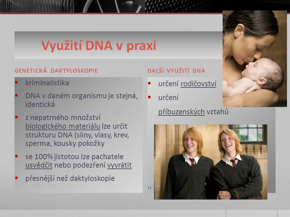 Využití DNA v praxi 12 GENETICKÁ DAKTYLOSKOPIEDALŠÍ VYUŽITÍ DNA  kriminalistika  DNA v daném organismu je stejná, identická  z nepatrného množství biologického materiálu lze určit strukturu DNA (sliny, vlasy, krev, sperma, kousky pokožky  se 100% jistotou lze pachatele usvědčit nebo podezření vyvrátit  přesnější než daktyloskopie  určení rodičovství  určení příbuzenských vztahů 13