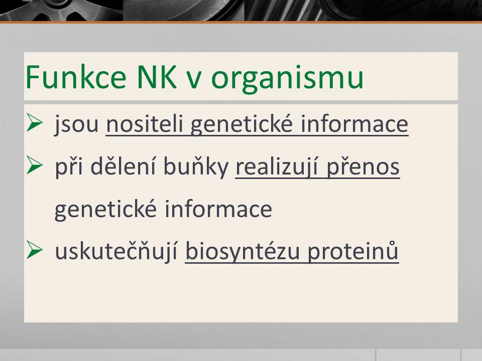 Funkce NK v organismu  jsou nositeli genetické informace  při dělení buňky realizují přenos genetické informace  uskutečňují biosyntézu proteinů