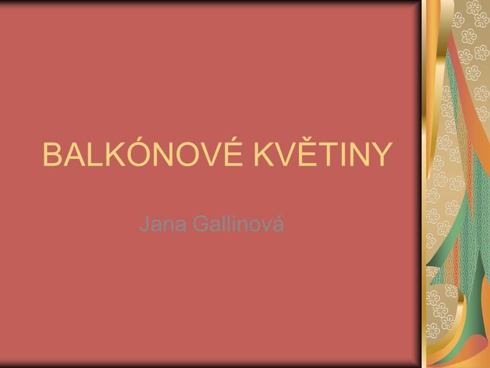 BALKÓNOVÉ KVĚTINY Jana Gallinová