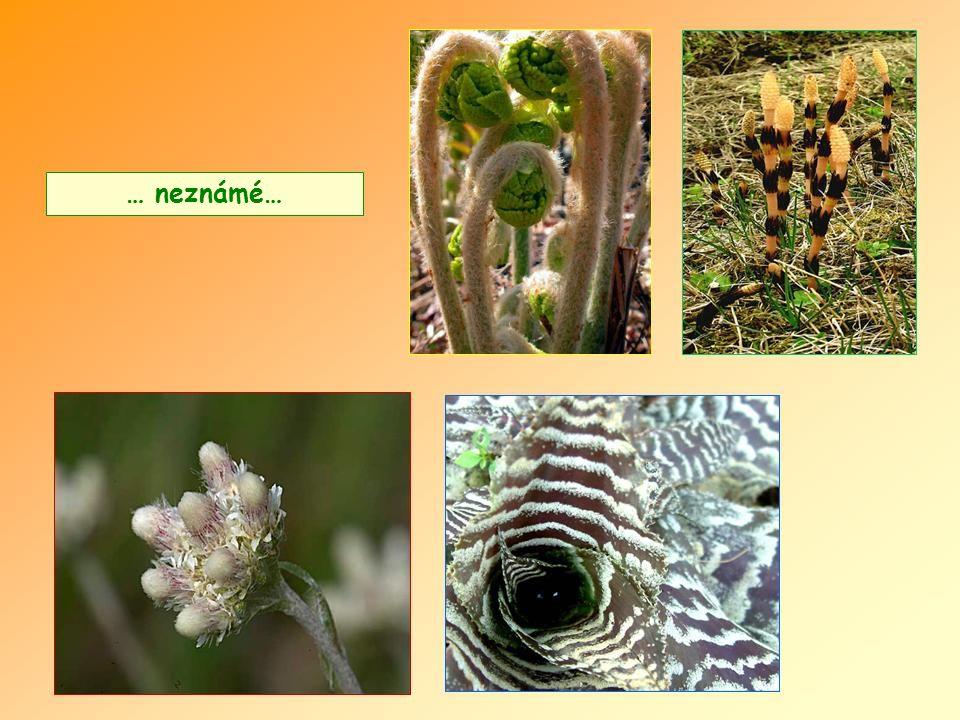 Existují květiny velice zajímavé…