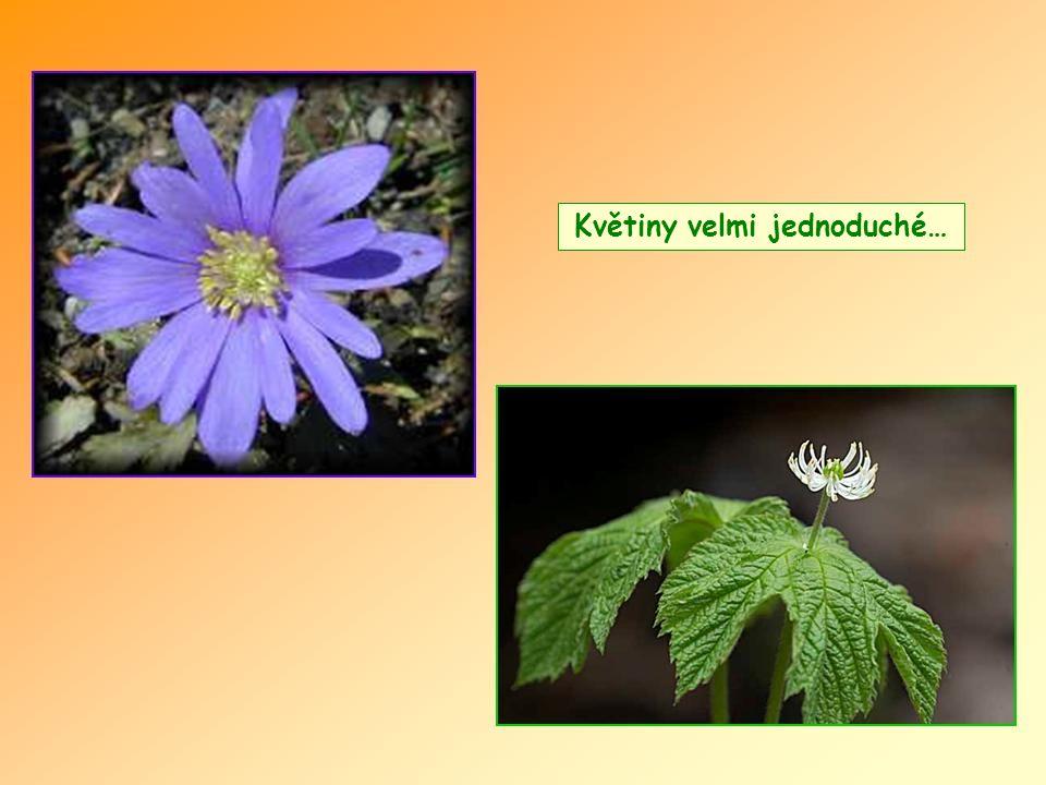 … jednou mohly jako ty květiny žít na jedné zemi v míru?