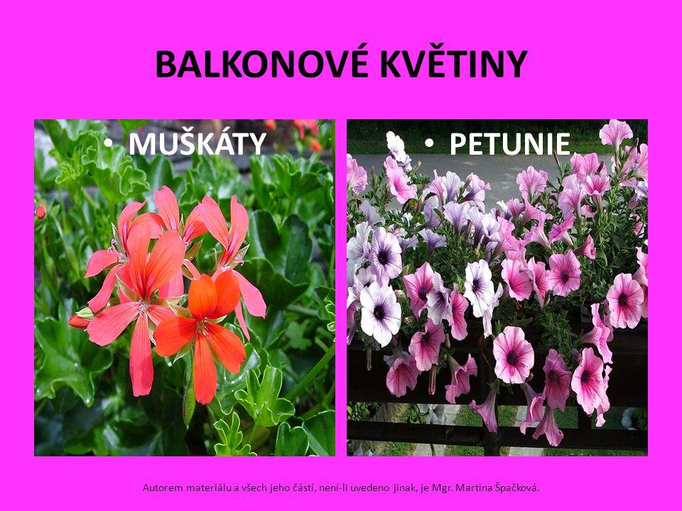BALKONOVÉ KVĚTINY MUŠKÁTY PETUNIE Autorem materiálu a všech jeho částí, není-li uvedeno jinak, je Mgr. Martina Špačková.