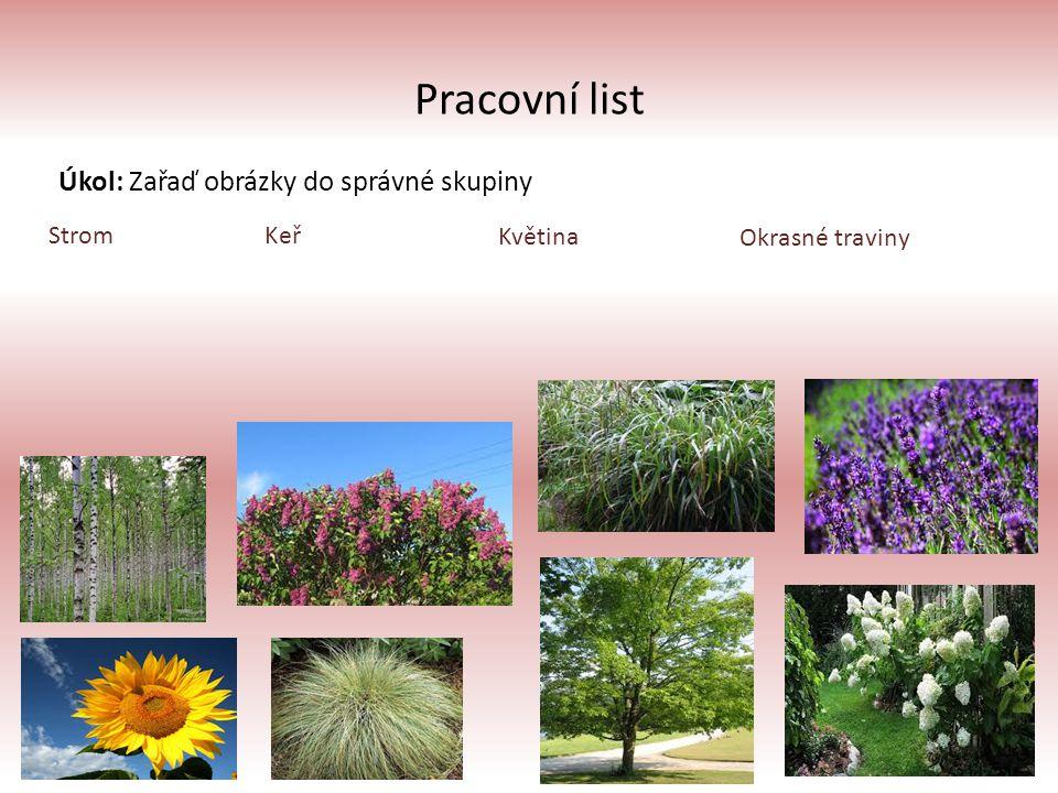 Pracovní list Úkol: Zařaď obrázky do správné skupiny StromKeř Květina Okrasné traviny