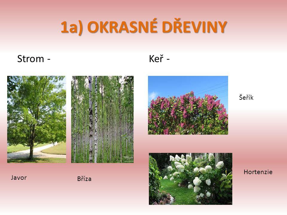 1a) OKRASNÉ DŘEVINY Strom -Keř - Javor Bříza Šeřík Hortenzie