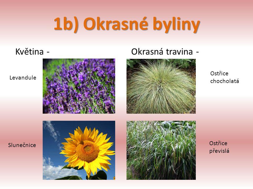 1b) Okrasné byliny Květina -Okrasná travina - Ostřice chocholatá Ostřice převislá Levandule Slunečnice
