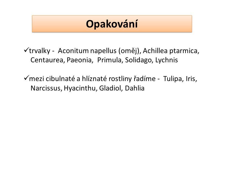 trvalky - Aconitum napellus (oměj), Achillea ptarmica, Centaurea, Paeonia, Primula, Solidago, Lychnis mezi cibulnaté a hlíznaté rostliny řadíme - Tulipa, Iris, Narcissus, Hyacinthu, Gladiol, Dahlia Opakování