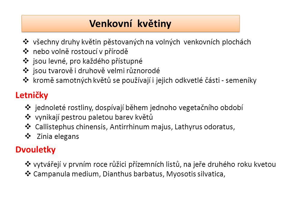 Tagetes Celosia Ageratum houstoniaum Cosmos bipinnatus Antirrhinum majus LETNIČKY