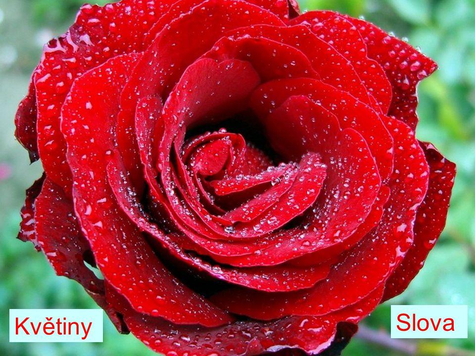 Květiny Slova