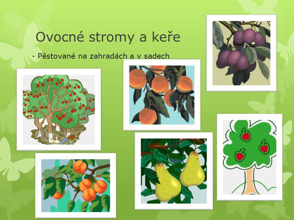Ovocné stromy a keře - Pěstované na zahradách a v sadech