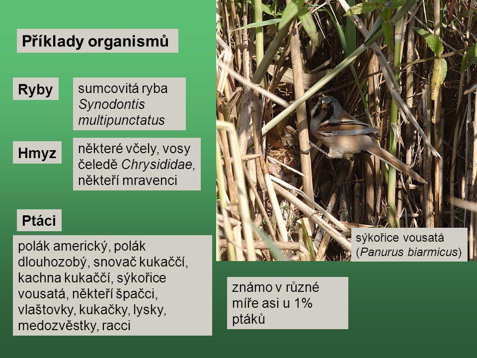 Ryby Příklady organismů Ptáci Hmyz sumcovitá ryba Synodontis multipunctatus některé včely, vosy čeledě Chrysididae, někteří mravenci polák americký, polák dlouhozobý, snovač kukaččí, kachna kukaččí, sýkořice vousatá, někteří špačci, vlaštovky, kukačky, lysky, medozvěstky, racci sýkořice vousatá (Panurus biarmicus) známo v různé míře asi u 1% ptáků
