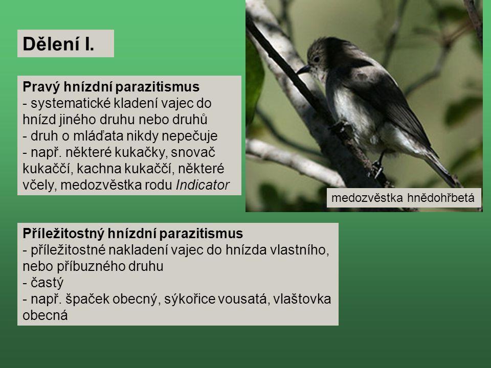 Pravý hnízdní parazitismus - systematické kladení vajec do hnízd jiného druhu nebo druhů - druh o mláďata nikdy nepečuje - např.