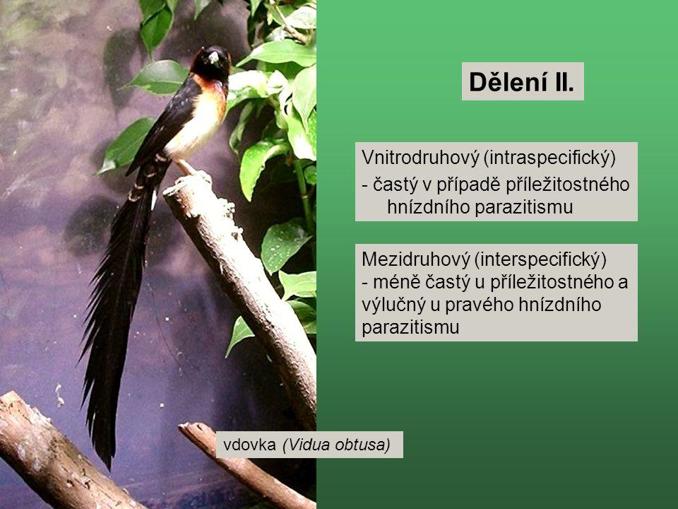 vdovka (Vidua obtusa) Dělení II. Vnitrodruhový (intraspecifický) - častý v případě příležitostného hnízdního parazitismu Mezidruhový (interspecifický)